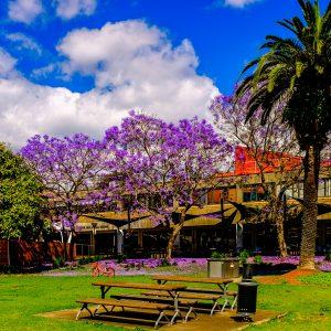Sydney University Enterprise Bargaining update